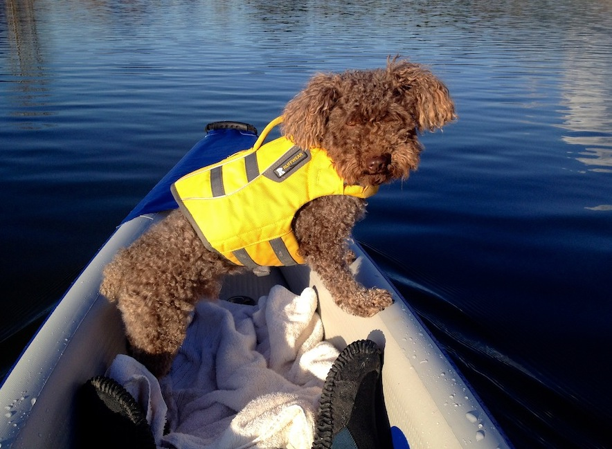 Seth the pup who loves to kayak