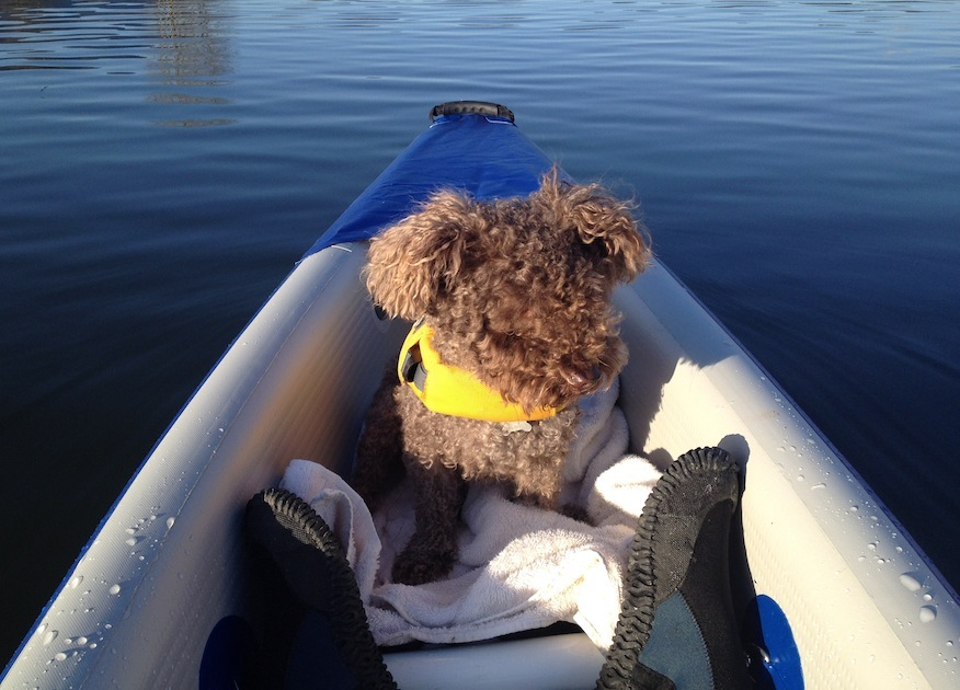 paddling the 393rl inflatable kayak with my dog Seth