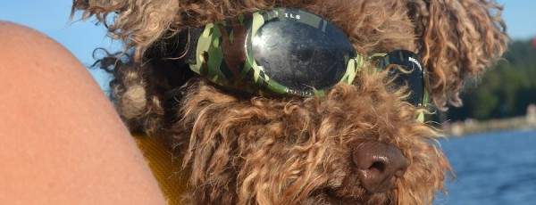 Doggles ILS Dog Goggles Review
